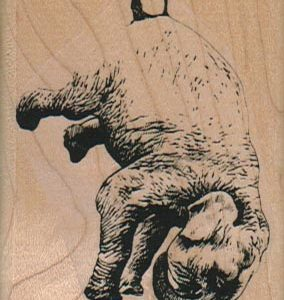 Elephant Headstand 2 x 2 1/2-0