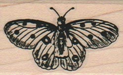Butterfly With Spots 1 1/4 x 1 3/4-0