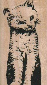 Cat Inquisitive/Small 1 1/4 x 2 1/2-0