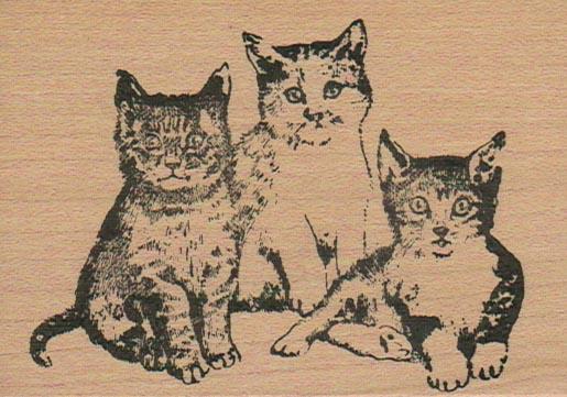 Kitty Trio 2 1/2 x 3 1/2-0