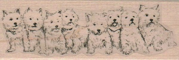 Eight Westies In A Row 1 3/4 x 4 3/4-0