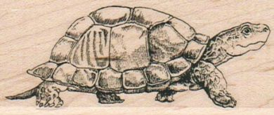 Turtle Taking A Stroll 1 1/2 x 3 1/4-0