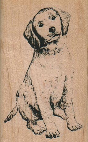 Dog With Cocked Head 2 x 3 1/4-0