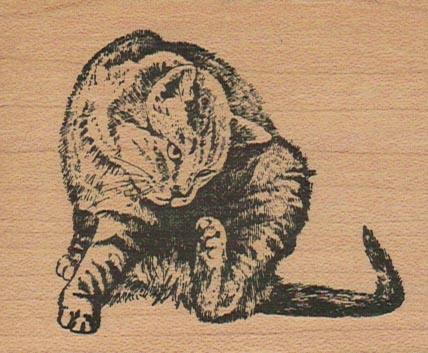 Kitty Scratching 2 1/2 x 3-0