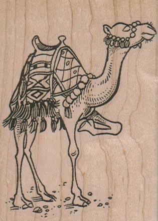 Camel Scratching 2 1/4 x 3-0