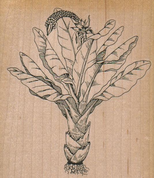 Egyptian Plant 3 3/4 x 4 1/4-0