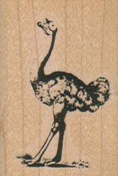 Ostrich 1 1/4 x 1 3/4-0