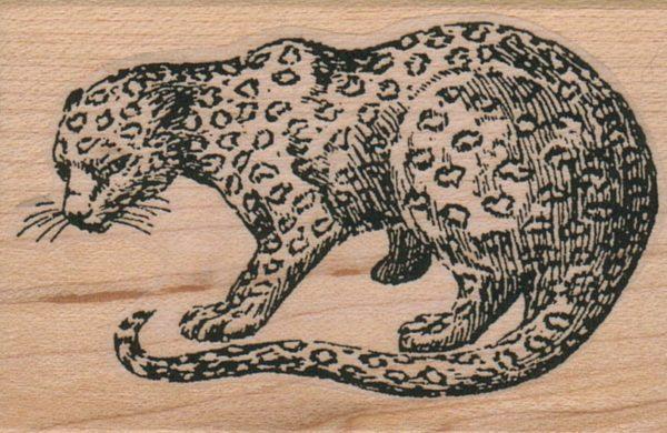 Cheetah Looking 2 x 2 3/4-0