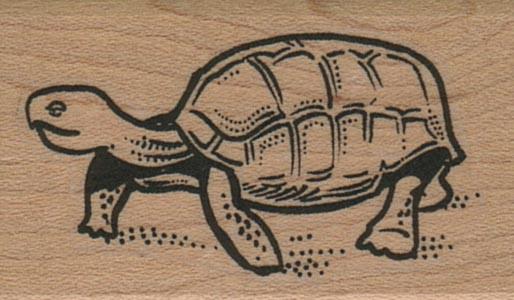 Turtle 1 1/4 x 1 3/4-0