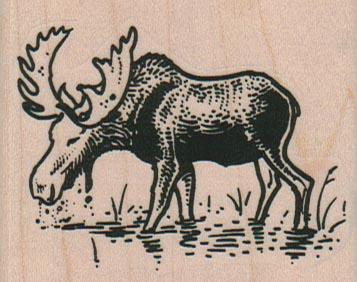 Moose In Water 2 1/2 x 2-0