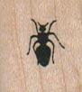 Ant 3/4 x 3/4-0
