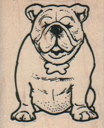 English BullDog 1 1/2 x 1 3/4-0