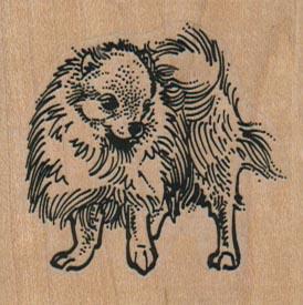 Pomeranian Dog 2 x 2-0