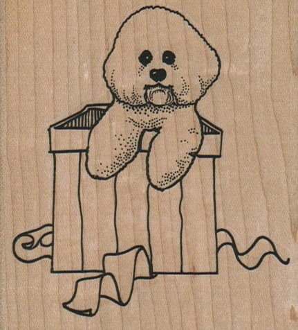Bichon In Gift Box 3 x 3 1/4-0