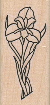Irises/Med 1 1/4 x 2 1/2-0