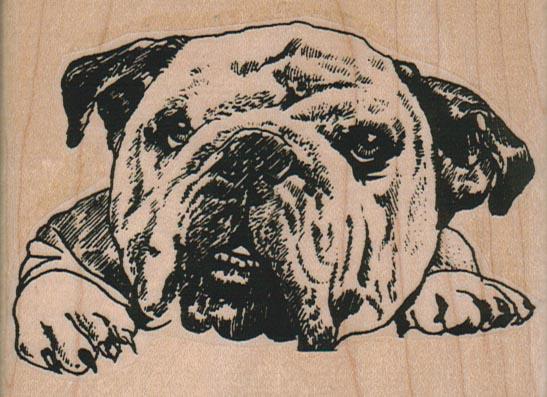 BullDog Head 3 3/4 x 2 3/4-0
