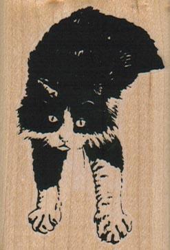 Cat Sprawl 1 3/4 x 2 1/2-0