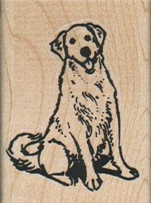 Golden Retriever Dog Sitting 1 1/2 x 2-0