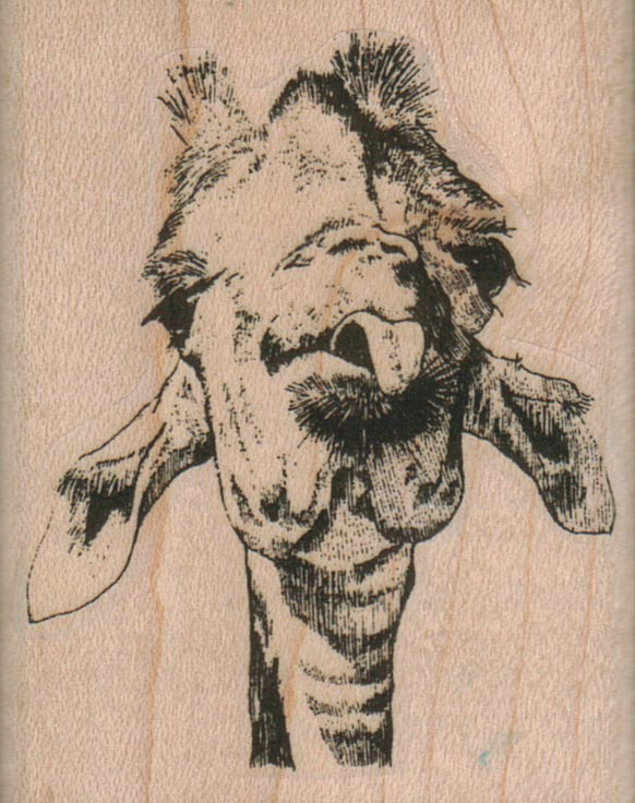 Giraffe Tongue/Large 2 x 2 1/2-0