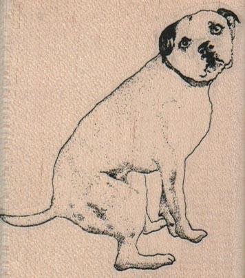 Squatting Bull Terrier Dog 2 1/2 x 2 3/4-0