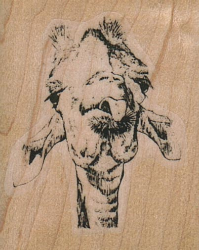 Giraffe Tongue/Small 1 1/2 x 1 3/4-0