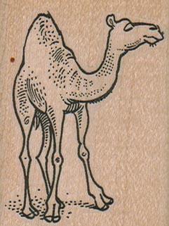 Camel 2 x 2 1/4-0