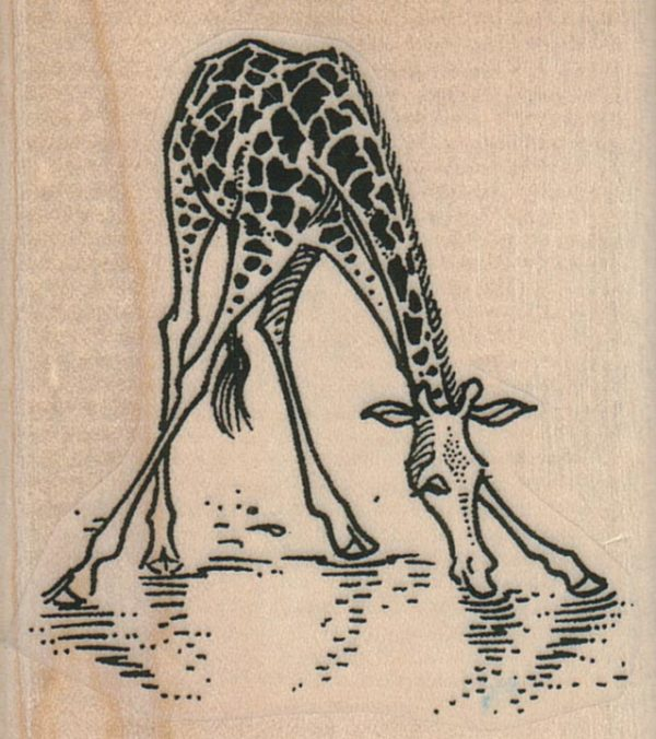 Giraffe Drinking 2 1/4 x 2 1/2-0