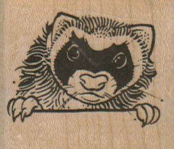 Raccoon Peering 1 3/4 x 1 1/2-0