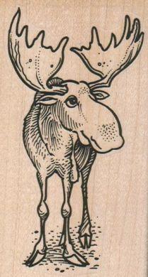 Moose Head On 2 1/4 x 3 3/4-0