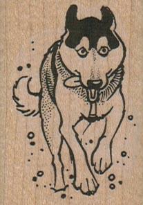 Running Dog 1 1/2 x 2-0