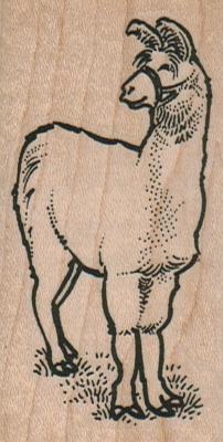 Llama Looking To Side 1 1/2 x 2 3/4-0