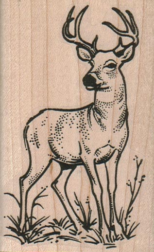 Deer Looking 2 1/4 x 3 1/2-0