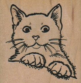 Apprehensive Cat 2 x 2-0