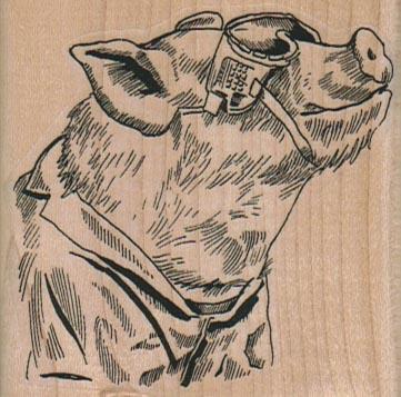 Pig In SunGlasses 2 1/2 x 2 1/2-0