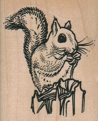 Squirrel Eating A Nut 2 1/4 x 2 3/4-0