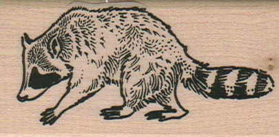 Raccoon 1 1/2 x 2 3/4-0