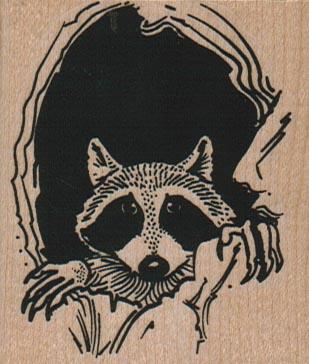 Raccoon Peeking Out Of Hole 2 1/4 x 2 1/2-0