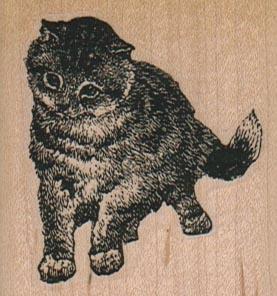 Inquisitive Cat 2 x 2-0