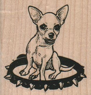 Chihuahua In Stud Collar 21/4 x 2 1/4-0
