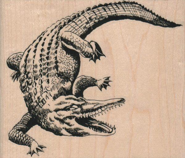 Alligator 4 1/4 x 3 1/2-0