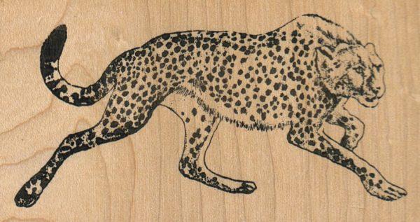 Cheetah 3 3/4 x 2-0