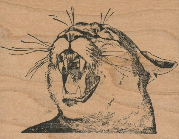 Snarling Cougar 3 x 3 3/4-0