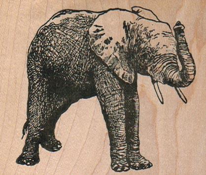 Elephant 2 1/2 x 2 1/2-0