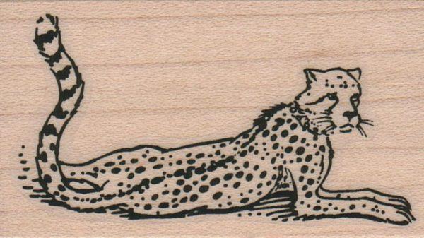 Cheetah 1 3/4 x 2 3/4-0