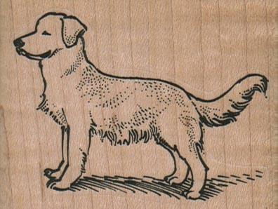 Golden Retriever Dog Posing 2 3/4 x 2-0