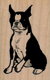 Boston Terrier Sitting 1 1/2 x 2 1/4-0