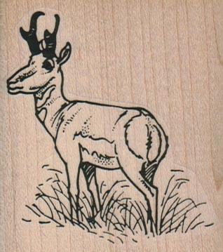 Deer In Field 2 1/4 x 2 1/2-0