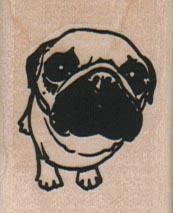 Pug Looking Up 1 1/4 x 1 1/2-0