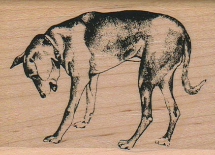 Dog Looking Down 2 1/4 x 3-0