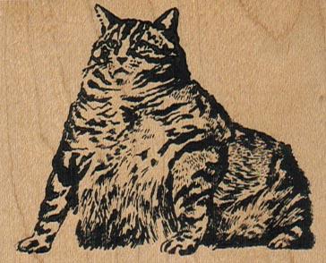 Fat Cat 2 1/2 x 2-0